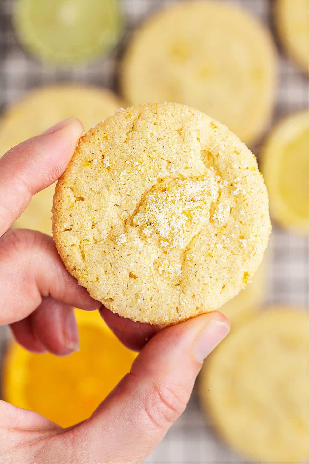 Sugar cookie with citrus flavor being held up.