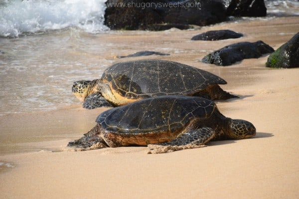sea-turtles-maui