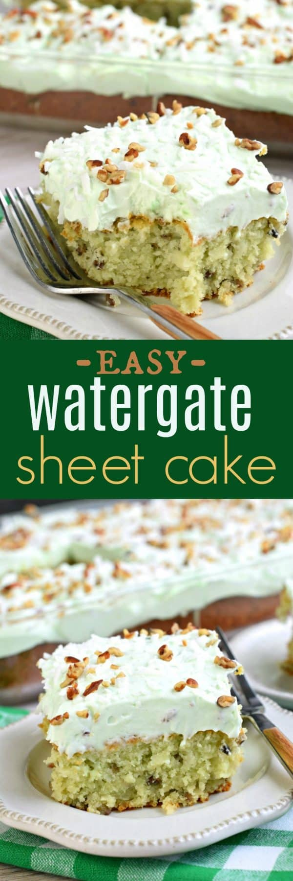 This Watergate Sheet Cake is nutty and moist thanks to pistachio pudding and pecans. Topped with a sweet, light whipped cream topping and coconut, this cake has it ALL, and it's easy to make too!